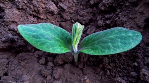 Keep Sowing Seeds